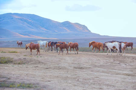 herd of horses moves in a field along a dirt road in a mountainous area
