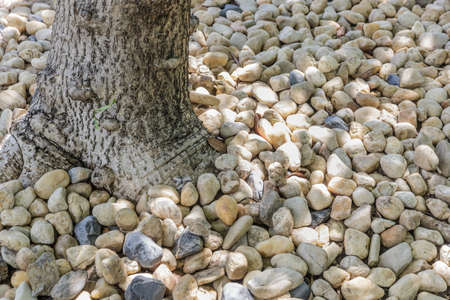 various pebble stones texture under shadow tree photo