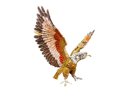 Sculpture of eagle isolate on white background  photo