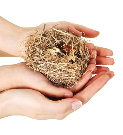 Bird nest in hands on a white background Фото со стока