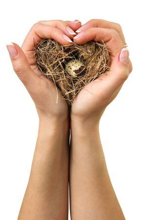 birds nest: Nido de aves en las manos sobre un fondo blanco