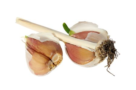 Germinating garlic on a white background. (isolated) photo