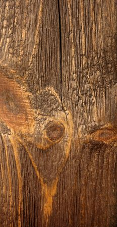 umber: invoice is texture of umber brown wood tree