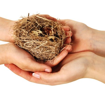 Bird nest in hands on a white background Imagens