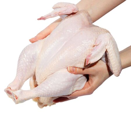 Fresh hen in a hand on a white background. (isolated) photo