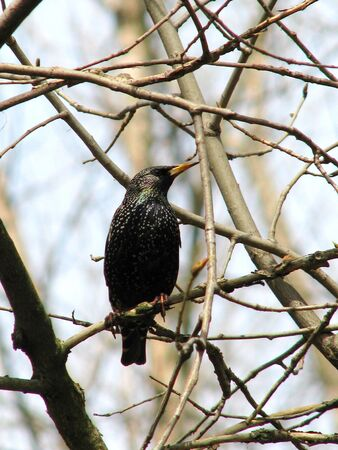 starling sits on a branch in the forest Stock Photo - 5175298