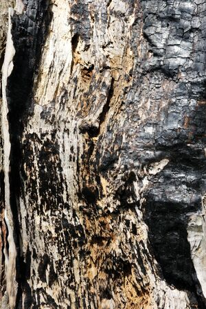 scorched: texture of the scorched tree