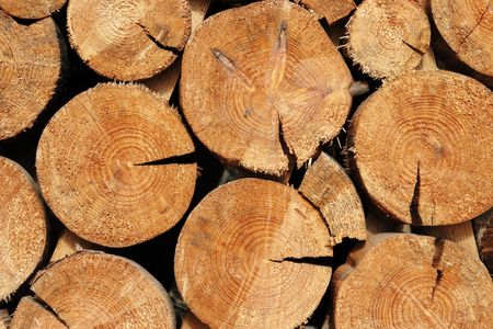 tree felling: forestry industry tree felling and timber logging