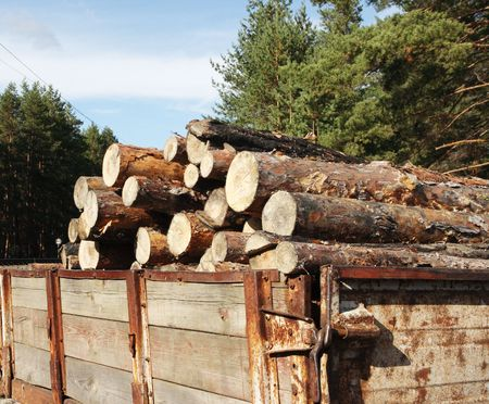 Loading logs of trees in the forest Stock Photo - 6021822