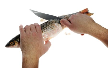 Preparation of baked fish on the white background photo