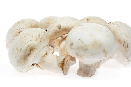 agaricus: White mushrooms, champignon white background, (Agaricus bisporus)