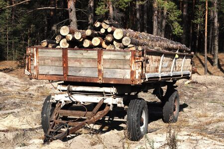 Loading logs of trees in the forest, background photo