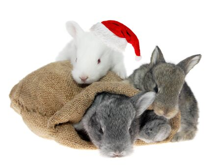 Three little rabbits in the bag in the Santa Claus hat on the white background photo