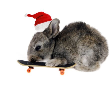 Little rabbit on a skateboard in Santa Claus hat against the white background photo
