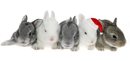 Five little rabbits in a row, one of Santa Kraus on the white background photo