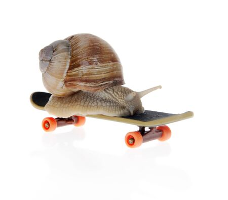 slithery: Snail on a  skateboard on the white background