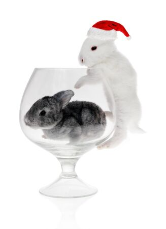 Rabbit in the glass and hat of Santa Claus on the white background photo