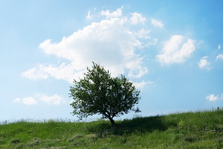 tree on the background of the cloudy sky Stock Photo - 7164576