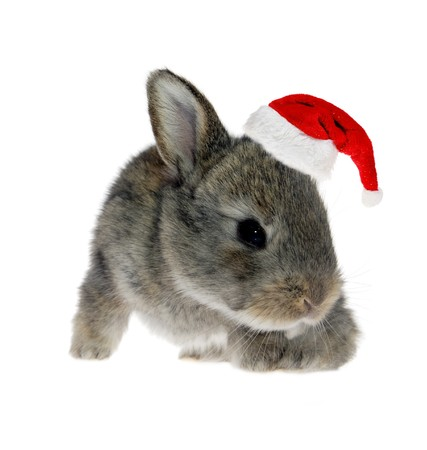 bunny xmas: Little rabbit in Santa Claus hat against the white background
