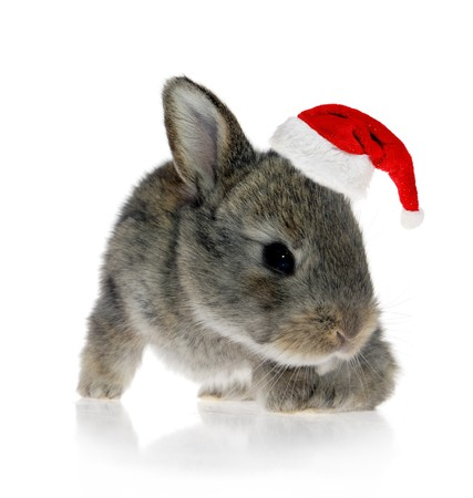 Little rabbit in Santa Claus hat against the white background