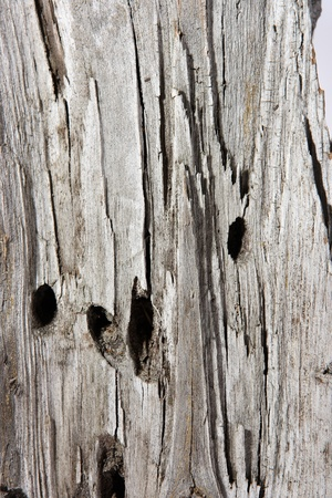 umber: texture of umber grey wood tree Stock Photo