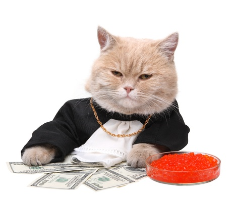 new year cat: Red cat sitting on the dollar on the white background, Christmas, New Year