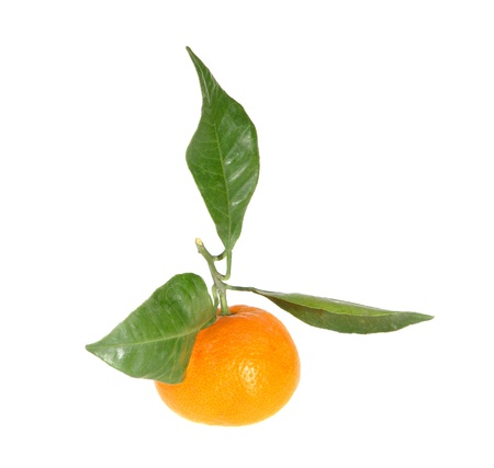 citrus reticulata: Mandarins with green leaves on the white background (Citrus reticulata) Stock Photo