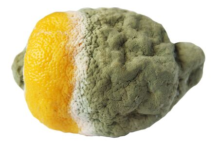 penicillium: Rotten lemon on a white background Stock Photo