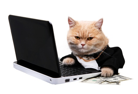 Red cat sitting on the laptop, dollar on the white background Imagens