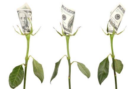 Flower of the American dollar on the white background