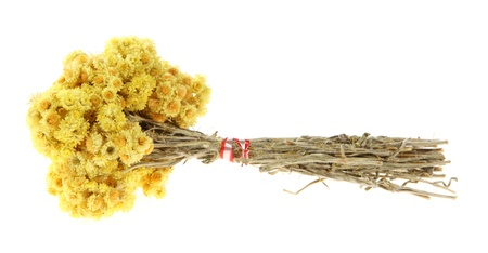 botanical remedy: Medicinal herbs on the white background, (Helichrysum)  Stock Photo