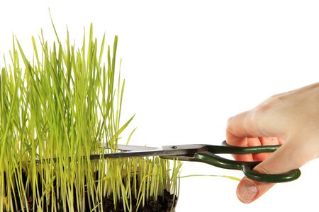 Cutting the Grass on white background Stock Photo - 11903795