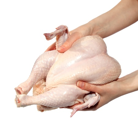 Fresh hen in a hand on the white background. (isolated) photo