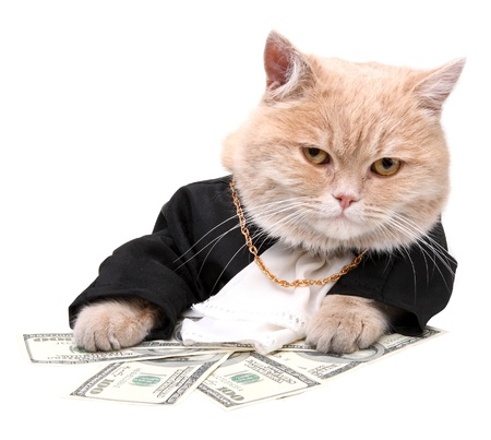 white cats: Red cat sitting on the dollar on the white background