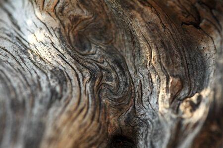 umber: texture of umber brown wood tree