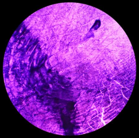 escamas de peces: Escamas de pescado bajo el microscopio, fondo, 40x
