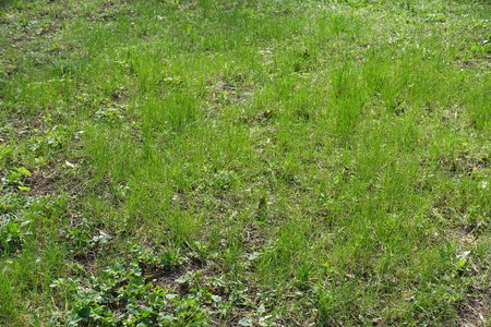 Natural uncultivated grass plot in the park Stock Photo