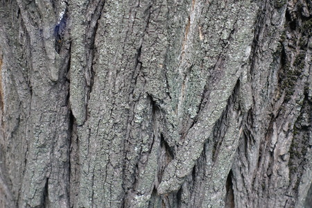 exasperate: Close view of surface of tree bark Stock Photo