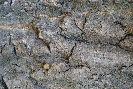 exasperate: Macro of surface of old tree bark