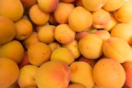 Bright orange fruits of apricot from above