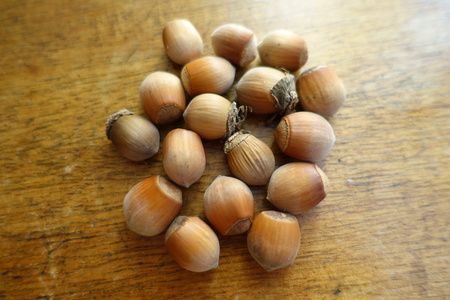 Group of ripe hazelnuts on wooden table Banque d'images