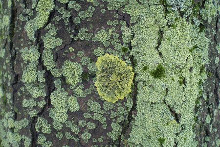 Moss and lichen in different shades of green