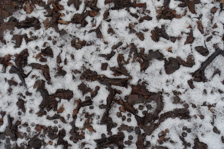 Thin layer of snow covering fallen leaves Фото со стока