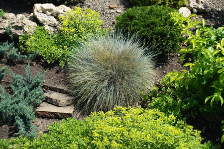 Various plants in the rock garden in May Stock Photo