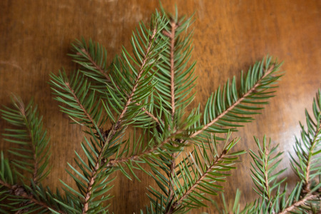 Prickly green branches of spruce on wooden table