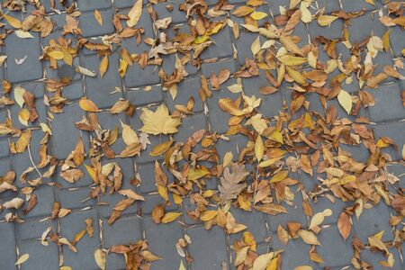 Brown fallen leaves on pavement in October Imagens