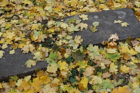 Concrete blocks covered by yellow maple leaves in October Imagens