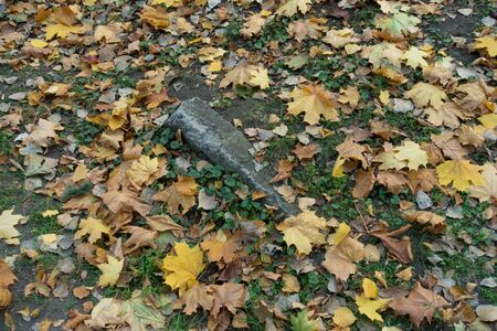 Glade with concrete block, ground ivy and fallen maple leaves in October Imagens
