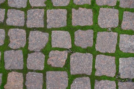Square granite pavement with green moss in joints from above