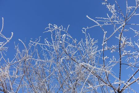 Crystalline frost on thin branches against blue sky in winter Archivio Fotografico
